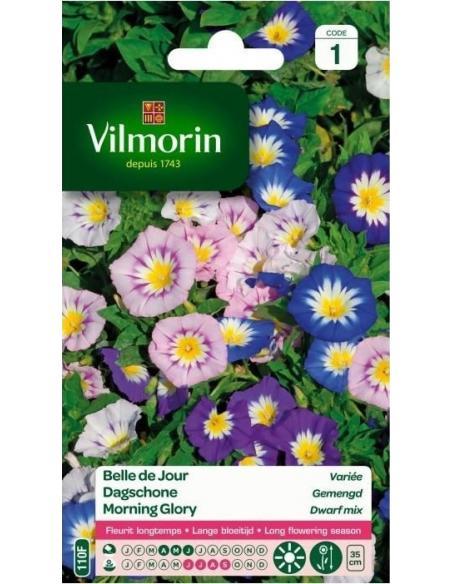 Belle de jour variée Vilmorin Graines de fleurs
