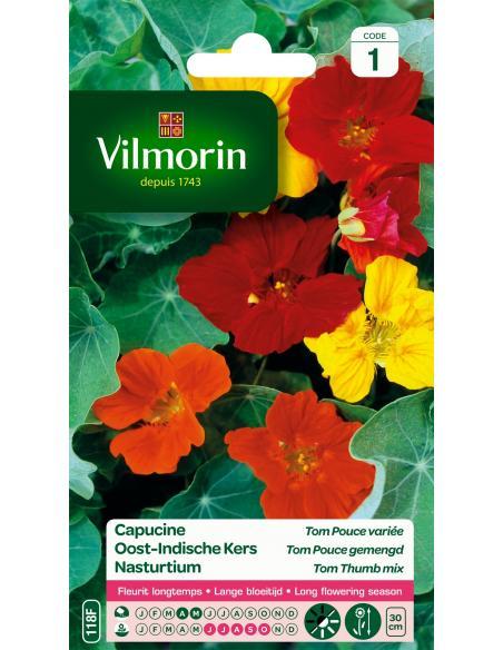 Capucine naine tom pouce variée Vilmorin Graines de fleurs