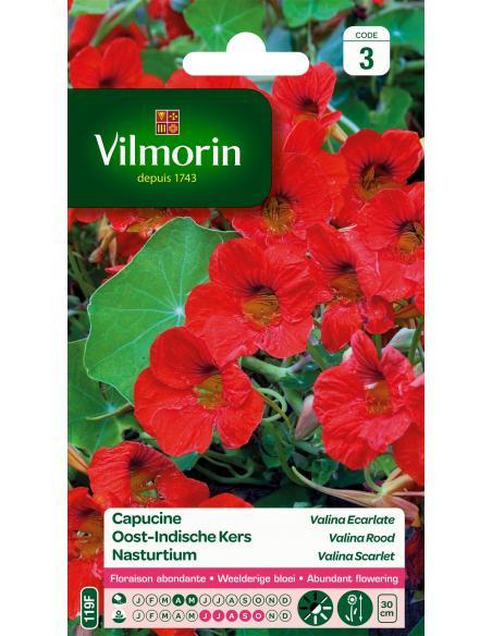 Capucine Valina écarlate Vilmorin Graines de fleurs