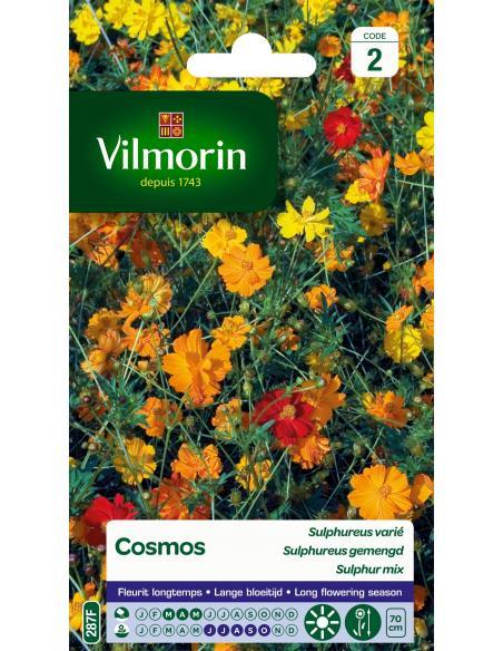 Cosmos sulphureus varié Vilmorin Graines de fleurs