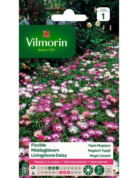 Ficoïde tapis magique Vilmorin Graines de fleurs