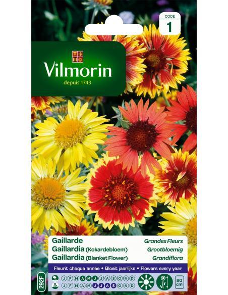 Gaillarde vivace variée Vilmorin Graines de fleurs