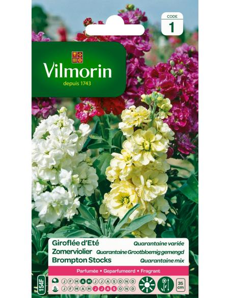 Giroflée Quarantaine à grande fleurs Vilmorin Graines de fleurs