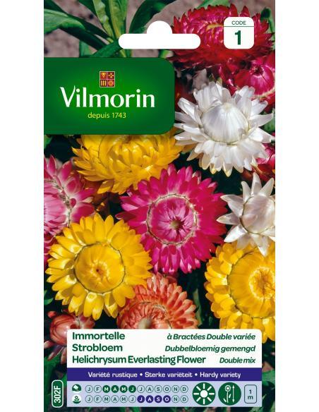 Immortelle Bractée double variée Vilmorin Graines de fleurs