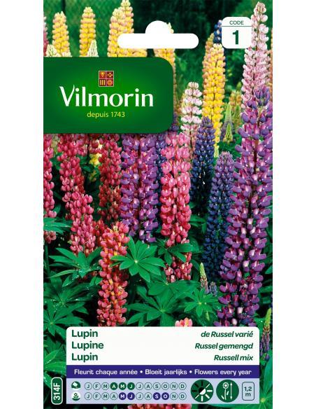 Lupin de Russell varié Vilmorin Graines de fleurs