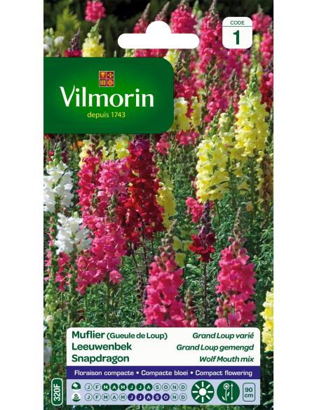 Muflier grand loup Vilmorin Graines de fleurs