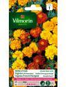 Oeillet d'Inde double nain varié Vilmorin Graines de fleurs