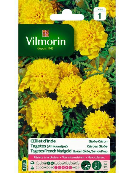 Oeillet d'Inde globe citron Vilmorin Graines de fleurs