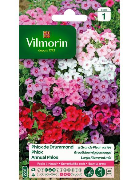 Phlox de Drummond à grandes fleurs Vilmorin Graines de fleurs