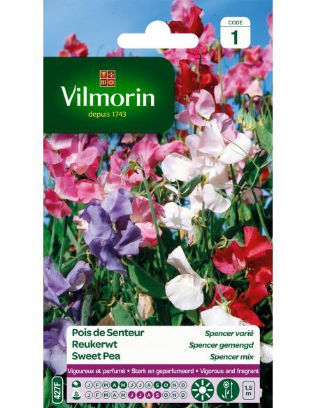 Pois de senteur Spencer varié Vilmorin Graines de fleurs