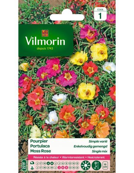 Pourpier simple grande fleur variée Vilmorin Graines de fleurs