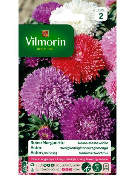 Reine Marguerite Naine Deesse variée Vilmorin Graines de fleurs