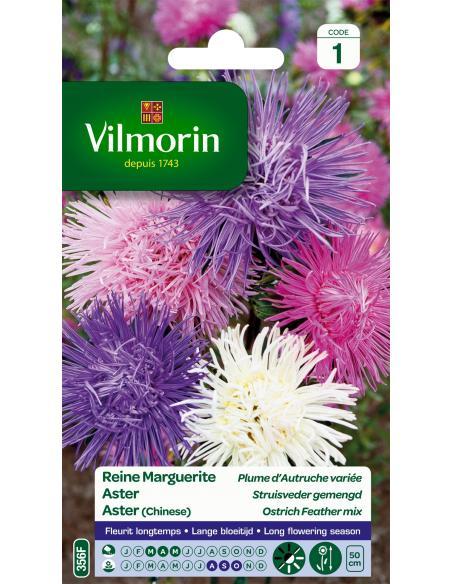 Reine Marguerite Plume d'Autruche variée Vilmorin Graines de fleurs