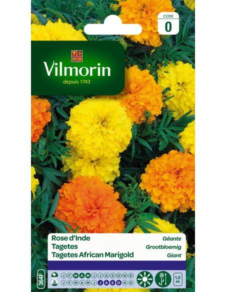 Rose d'Inde géante Vilmorin Graines de fleurs