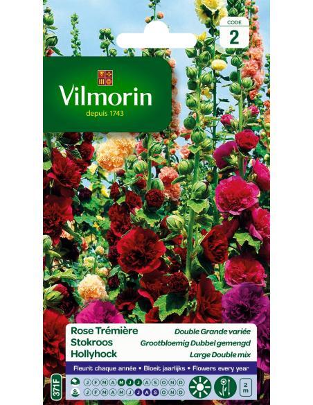 Rose Trémière double grande variée Vilmorin Graines de fleurs
