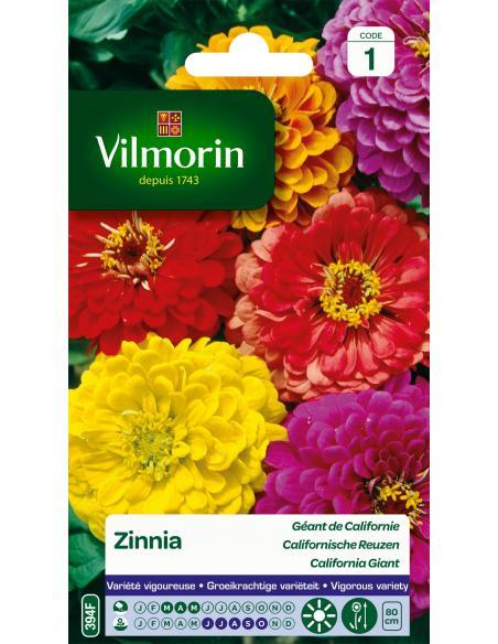 Zinnia Géant de Californie varié Vilmorin Graines de fleurs