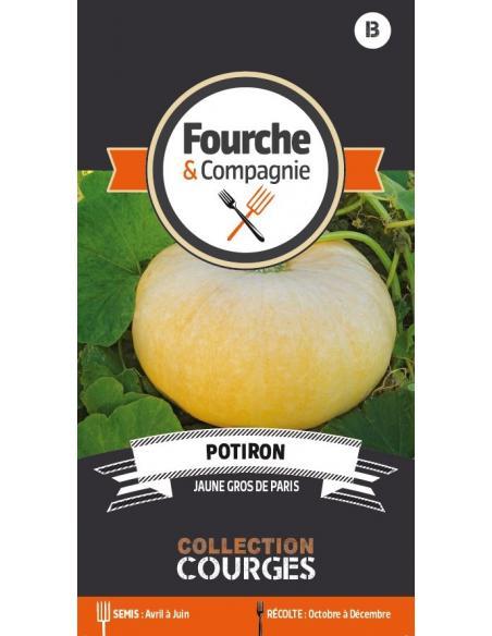Potiron jaune gros de Paris Fourche et Compagnie Graines potagères