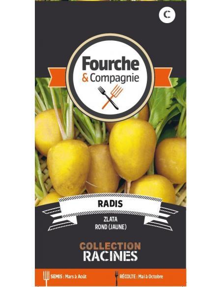 Radis Zlata rond jaune Fourche et Compagnie Graines potagères