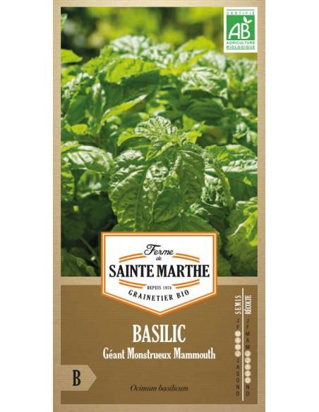 Basilic géant (Monstrueux Mammouth) La Ferme de Sainte Marthe Graines aromatiques