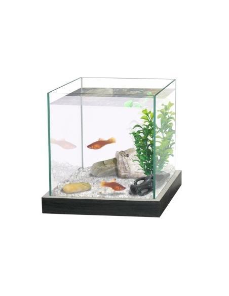 Aquarium combattant Noir  Aquariums et meubles pour aquariums