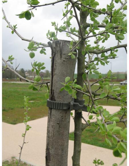 Collier pour Arbre 35 cm X 4 BHS Tuteurage et autres accessoires