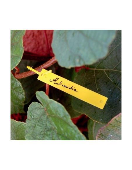 Etiquettes à suspendre X 40 Nortène Matériel pour semis